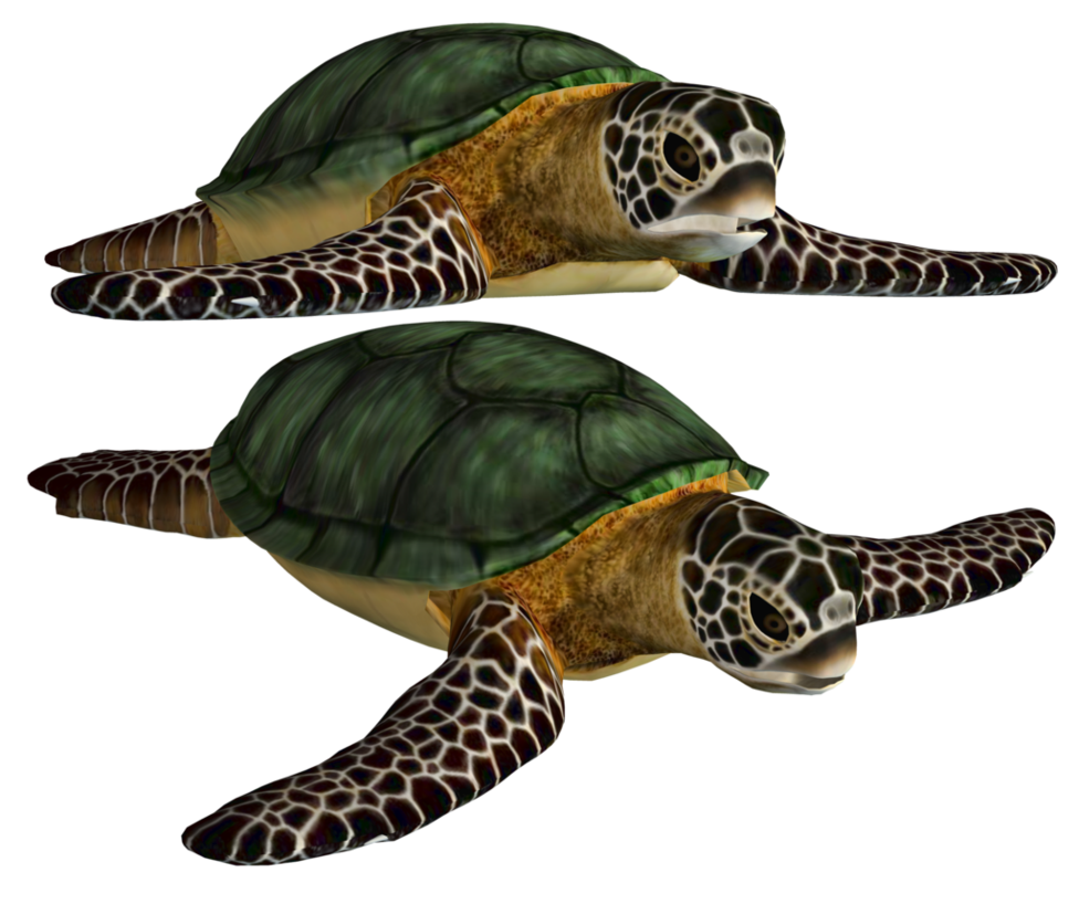 Sea turtle png. Stock by roy d