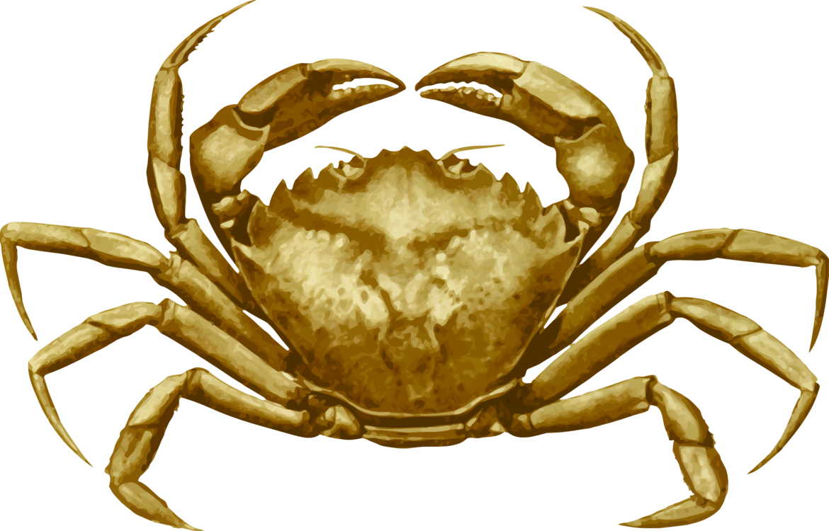 Seafood drawing cancer. Dungeness crab freshwater european