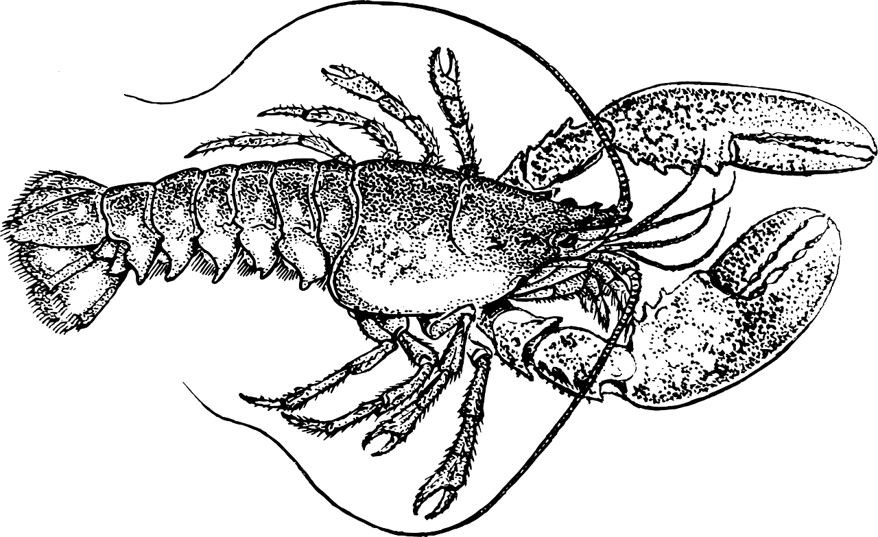 Seafood drawing invertebrate animal. Lobster art clip transprent