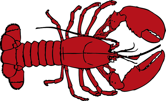 Seafood drawing lobster maine. Free image on pixabay