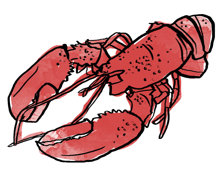 Seafood drawing lobster maine. Shades of red