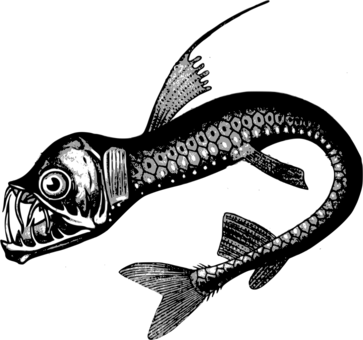 Seafood drawing realistic. Images under cc license