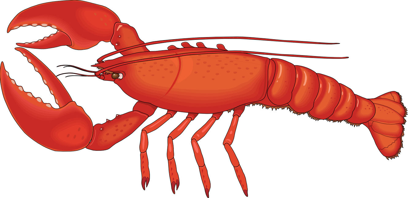 Seafood drawing rock lobster. Clip art images clipart