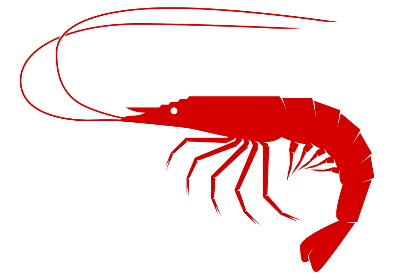 Seafood drawing shrimp. Clip art free swimmers
