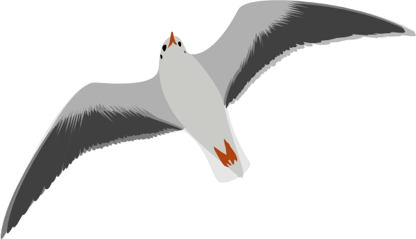 Seagull clipart. Free