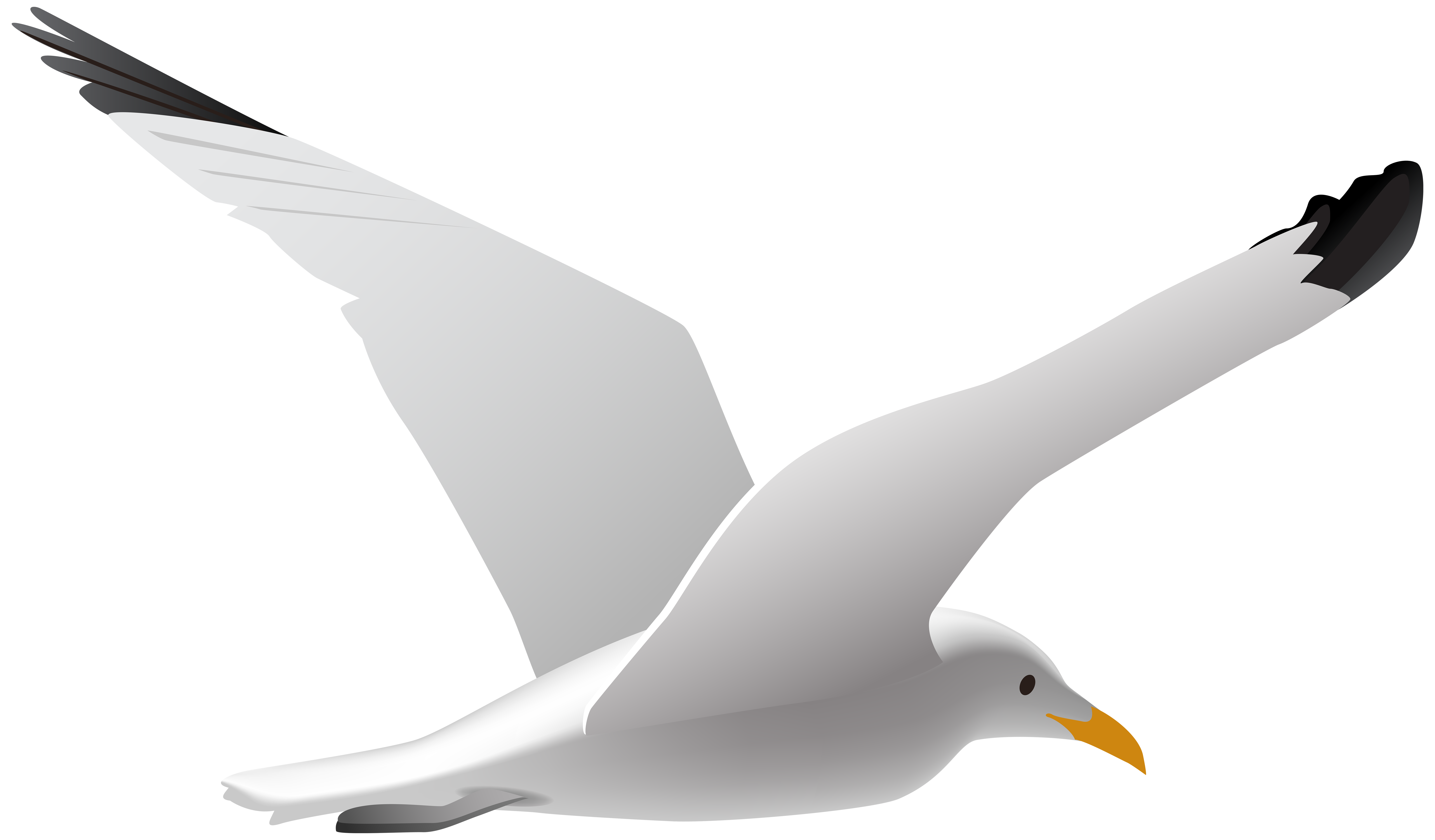 Seagull clipart. Png clip art image