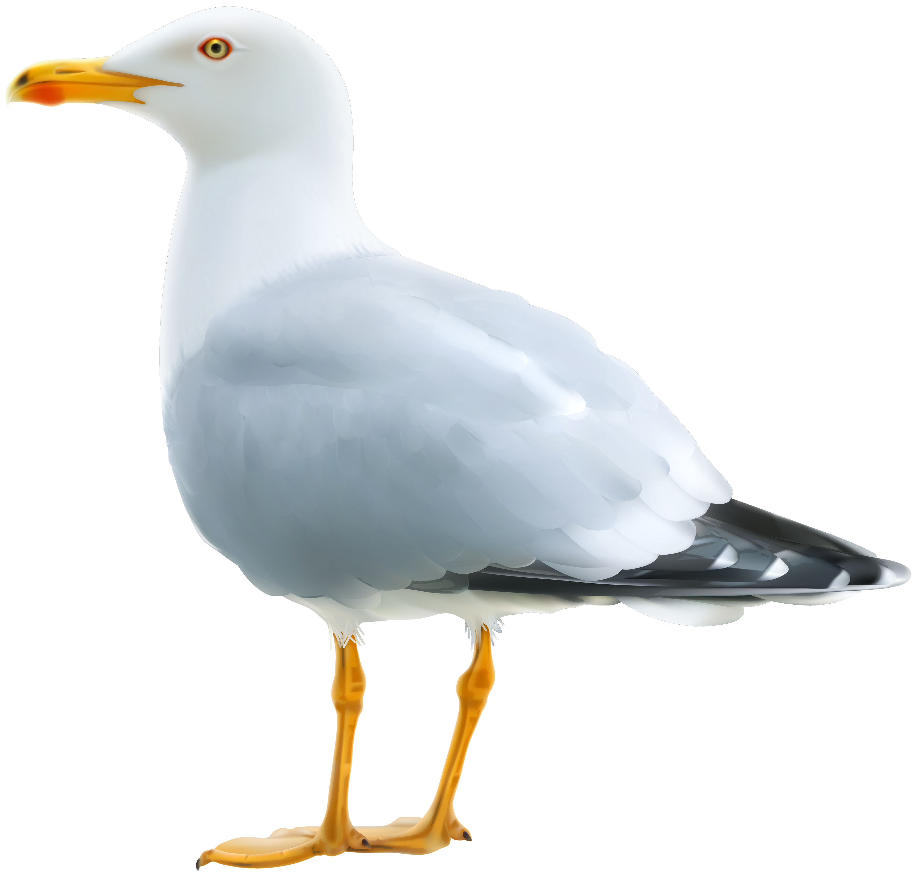 seagull open mouth png