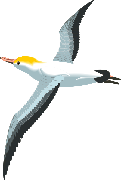 Seagull flying png. Sea gull clip art