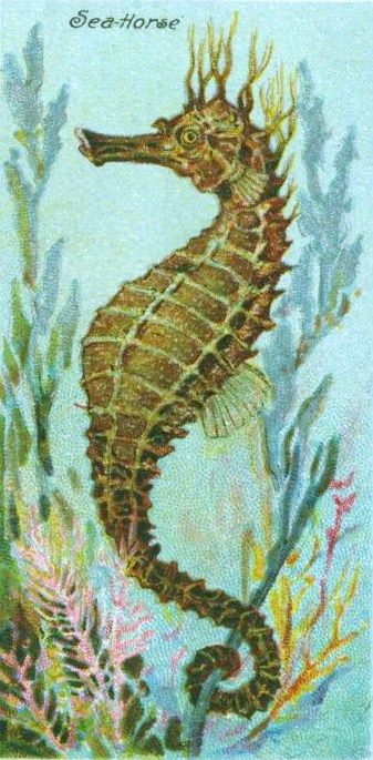 Seahorse clipart seaside. Vintage by the pinterest