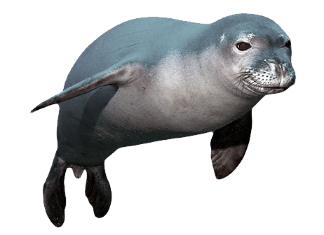 seal animal png
