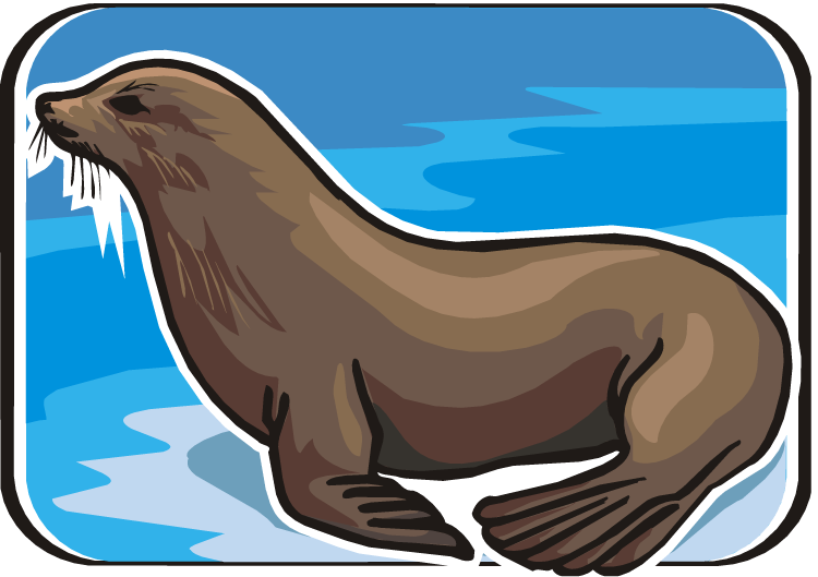 Seal clipart. Free sea lion