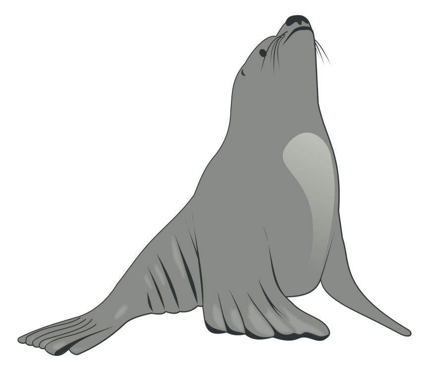 Seal clipart aquatic animal. Sea lion earless drawing