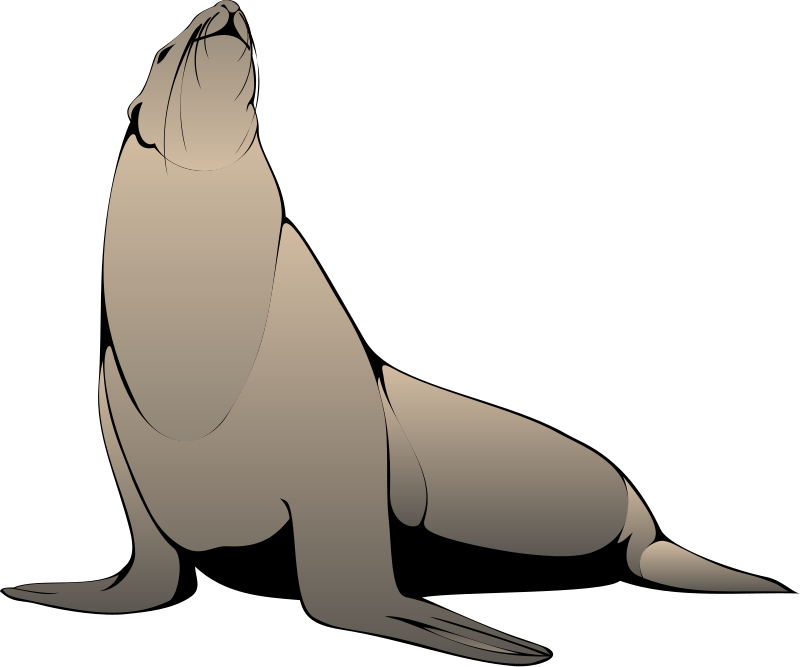 Seal clipart aquatic animal. Pictures royalty free org