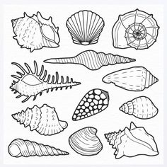Shell clipart. Clip art black and