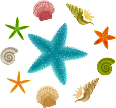 Seashells clipart starfish. Vector free download for