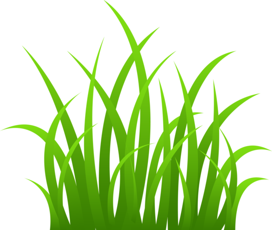 Seaweed clipart clear background. Grass clip art on