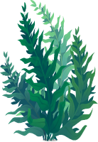 Png seaweed. Clipart fish with attitude