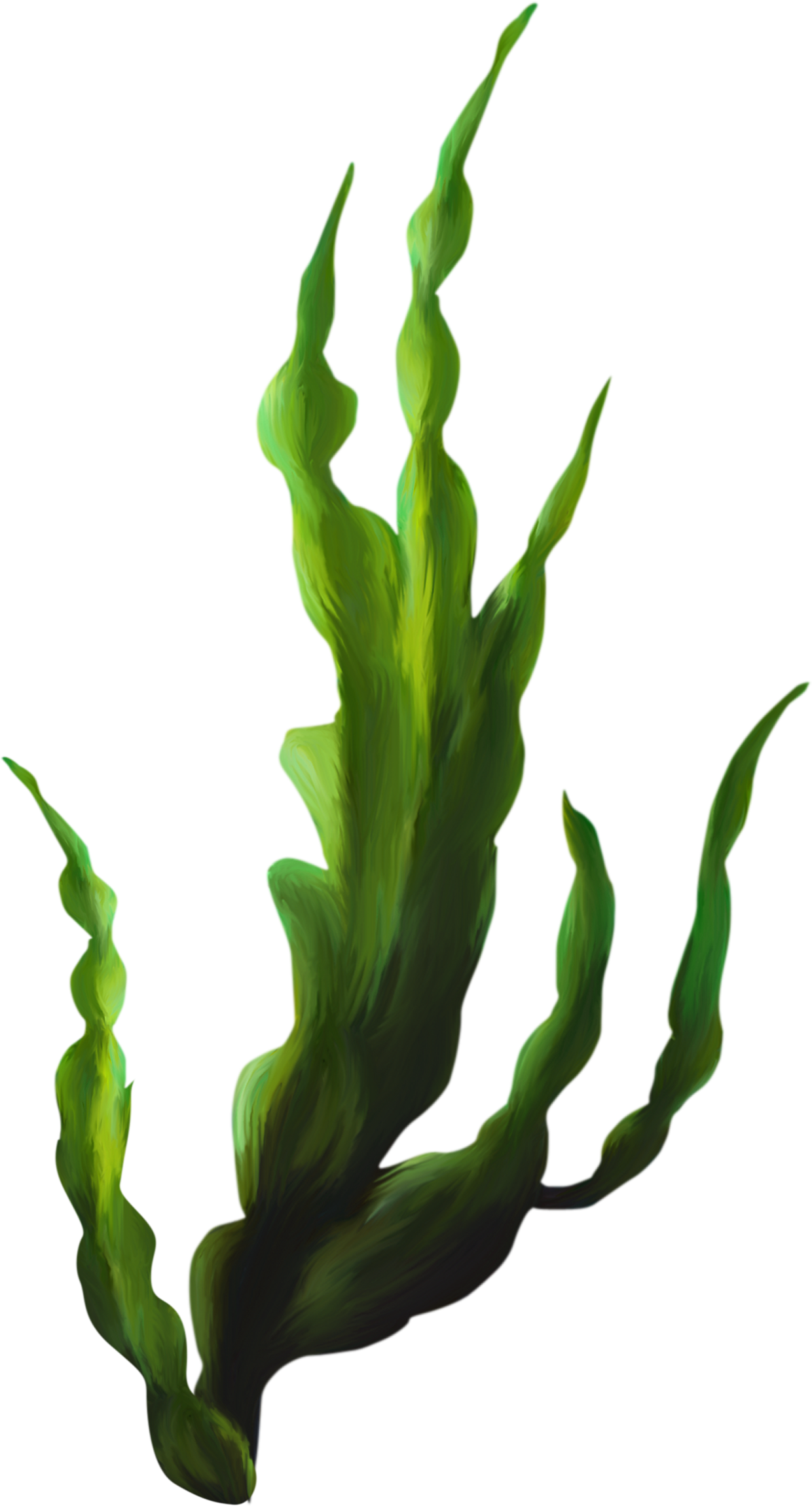 Seaweed png transparent. Collection of clipart