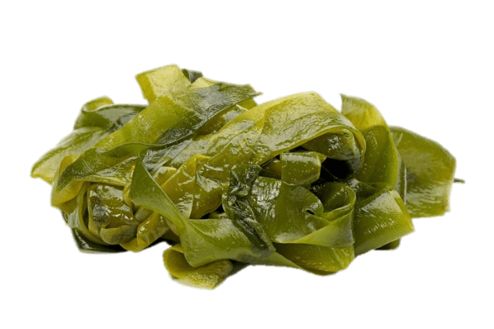 Seaweed png transparent. Leaves stickpng nature