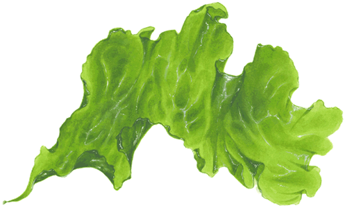 Seaweed png transparent. Recommendations from the seafood
