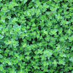 Seed clipart ground cover. Best glorious covers