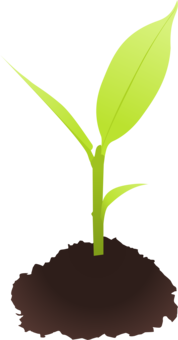 Sprout clipart grass seed. Sprouting seedling download free