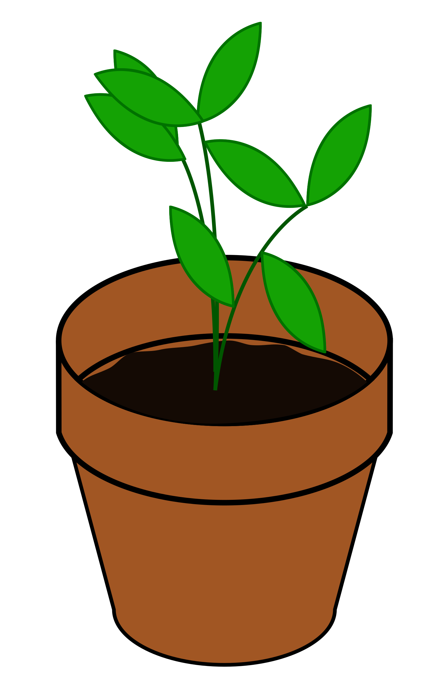Seedling clipart big plant. Terracotta image png