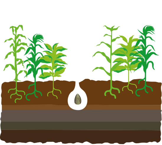 seedling clipart fertile