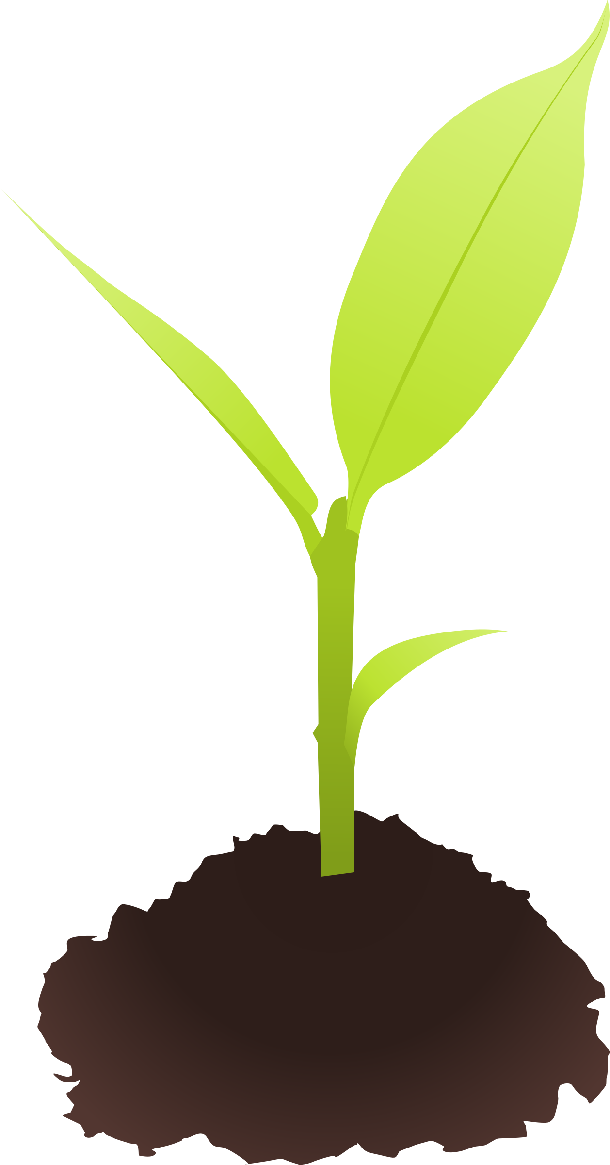 Seedling clipart tiny plant. Seed small pencil and