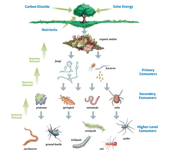 Seeds clipart soil bacteria. Composting life in the