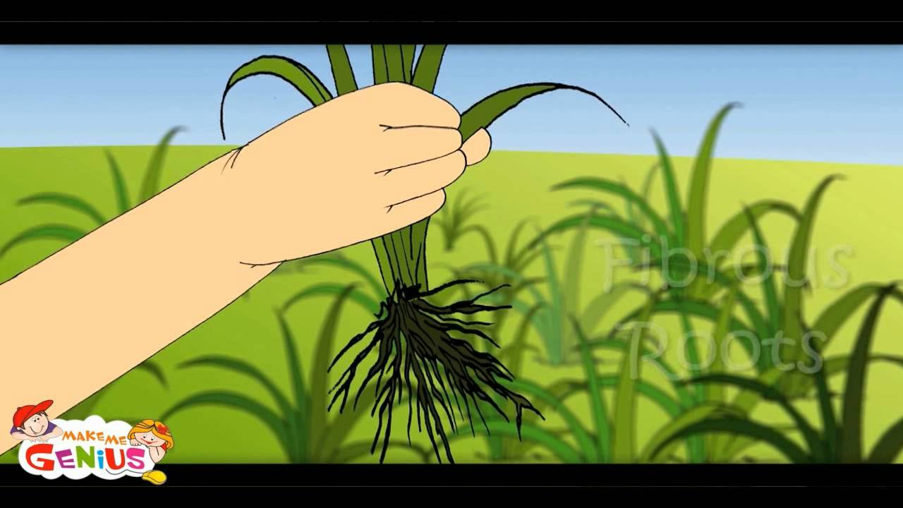 Seeds clipart soil sample. Parts of plant lesson