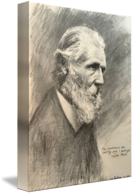 Impressionistic drawing pencil. John muir by jon