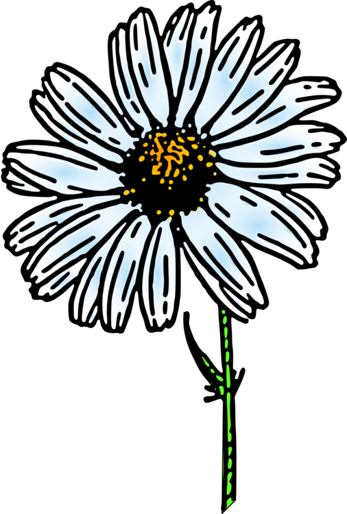 Wedgie drawing daisy. Flower common family nature