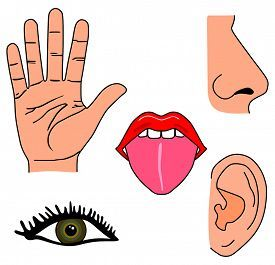 Senses clipart. Image result for my