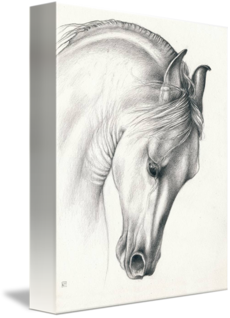 Sepia drawing horse. Classic andalusian by evey