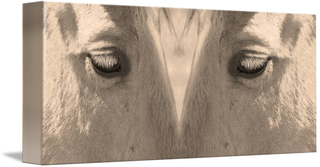 Sepia drawing horse. Eyes love by james