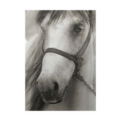 Sepia drawing horse. In poster pixers we
