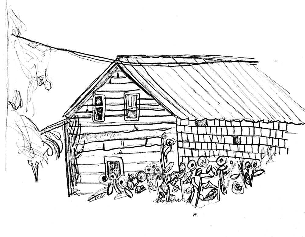 Shack drawing cow shed. About wolfe island records