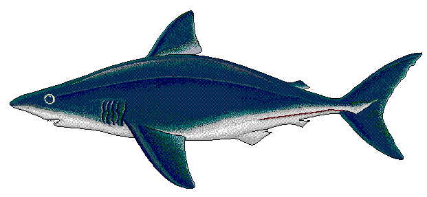 Shark clipart frilled shark. Free page of public
