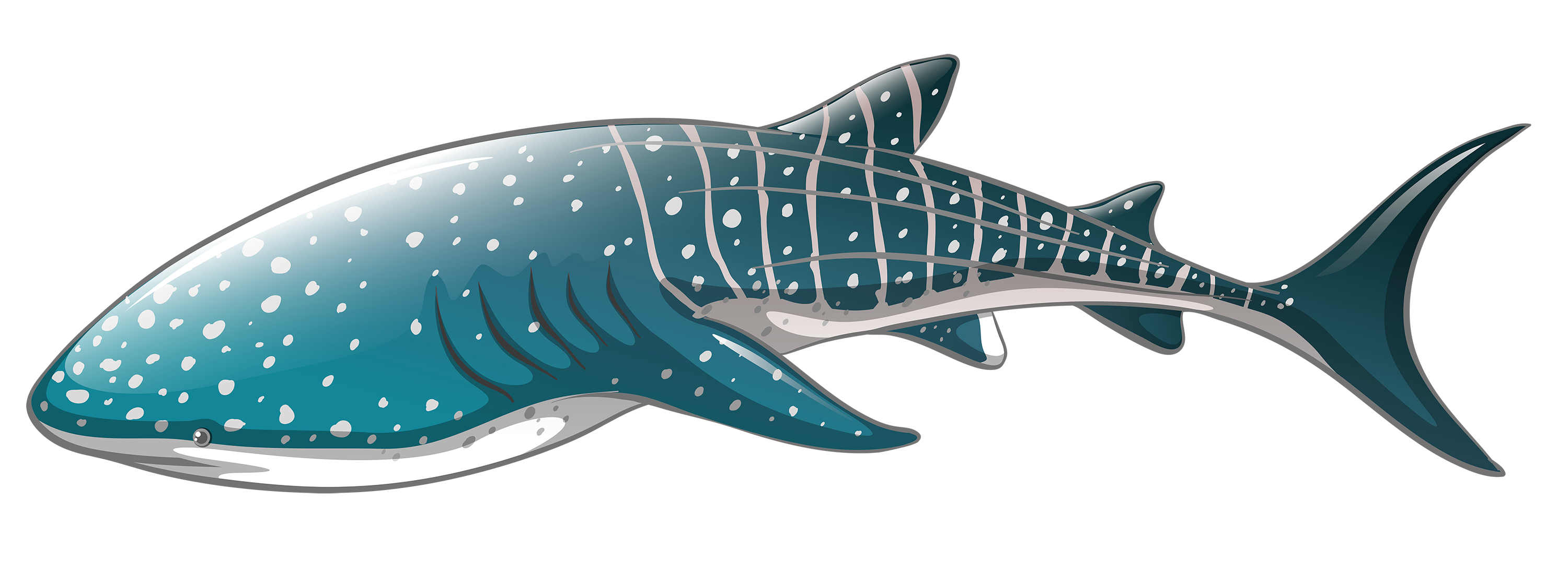 Shark png best web. Whale clipart graphic freeuse library