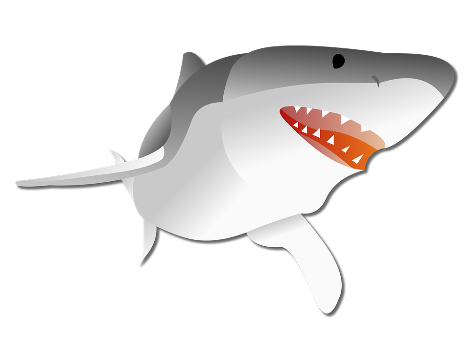 Vector sharks ikan hiu. Shark graphic group with