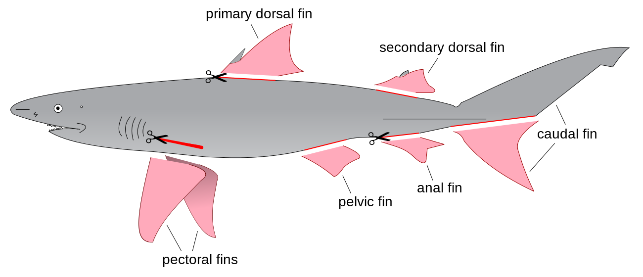 Vector sharks shark fin. File finning diagram svg