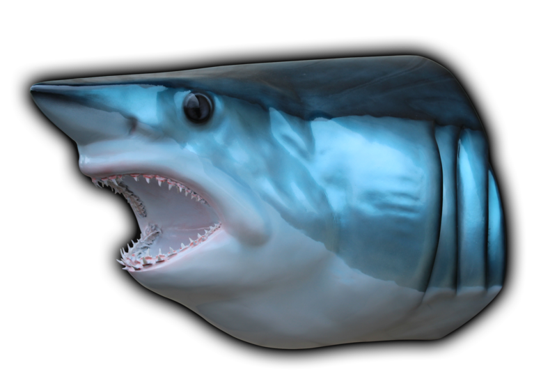 Shark mouth open png. Porbeagle fish mount and