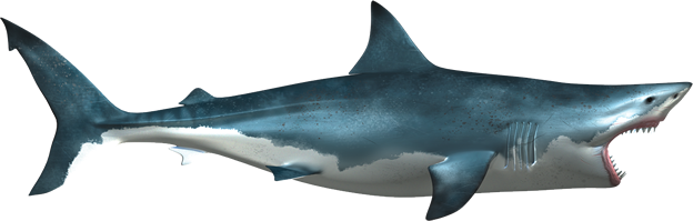 Shark mouth open png. Hq transparent images pluspng