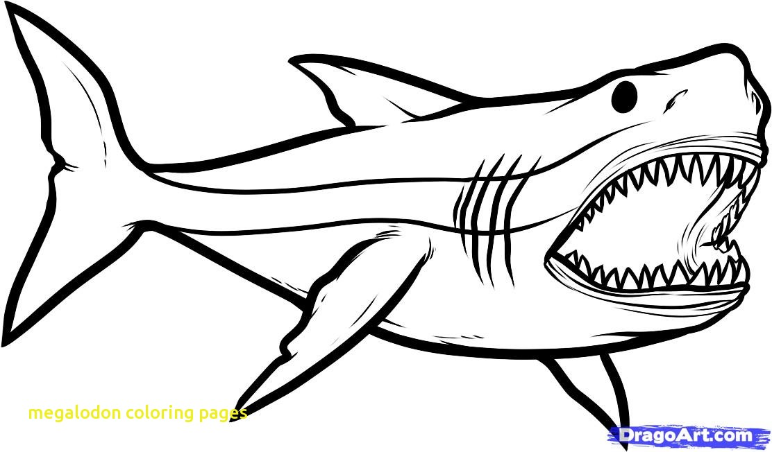 Sharks clipart megalodon. Coloring pages with mako