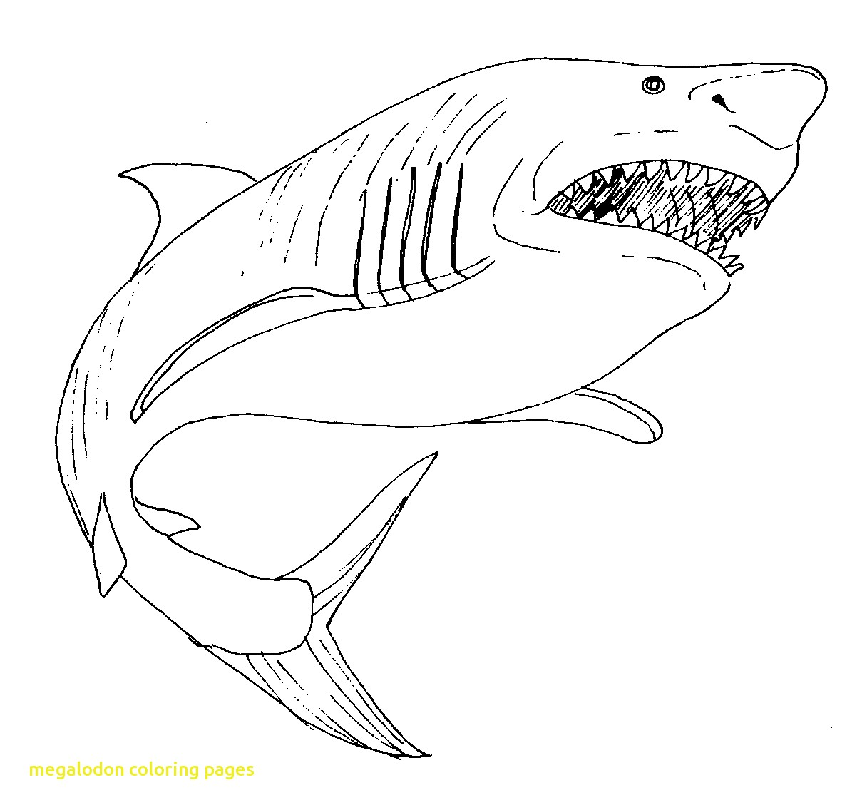 Sharks clipart megalodon. Coloring pages with shark