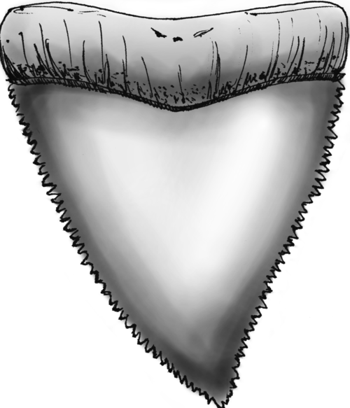 Sharp tooth png. Unshark week the most