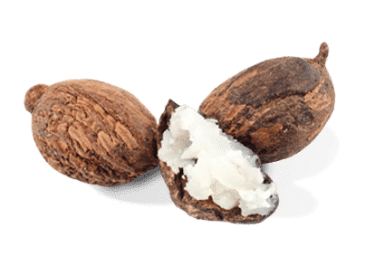 almond vector shea nut