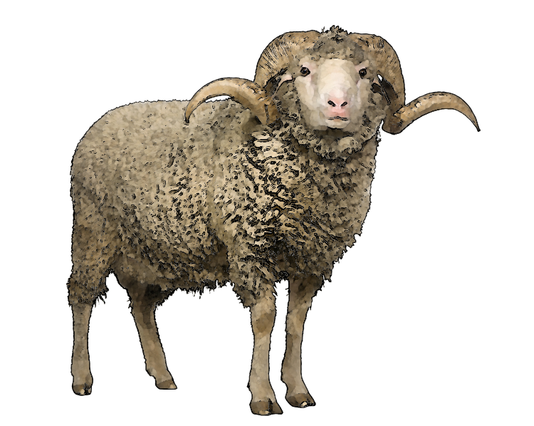 Sheep transparent png. Picture web icons download