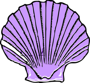 Shells clipart purple clipart. Shell